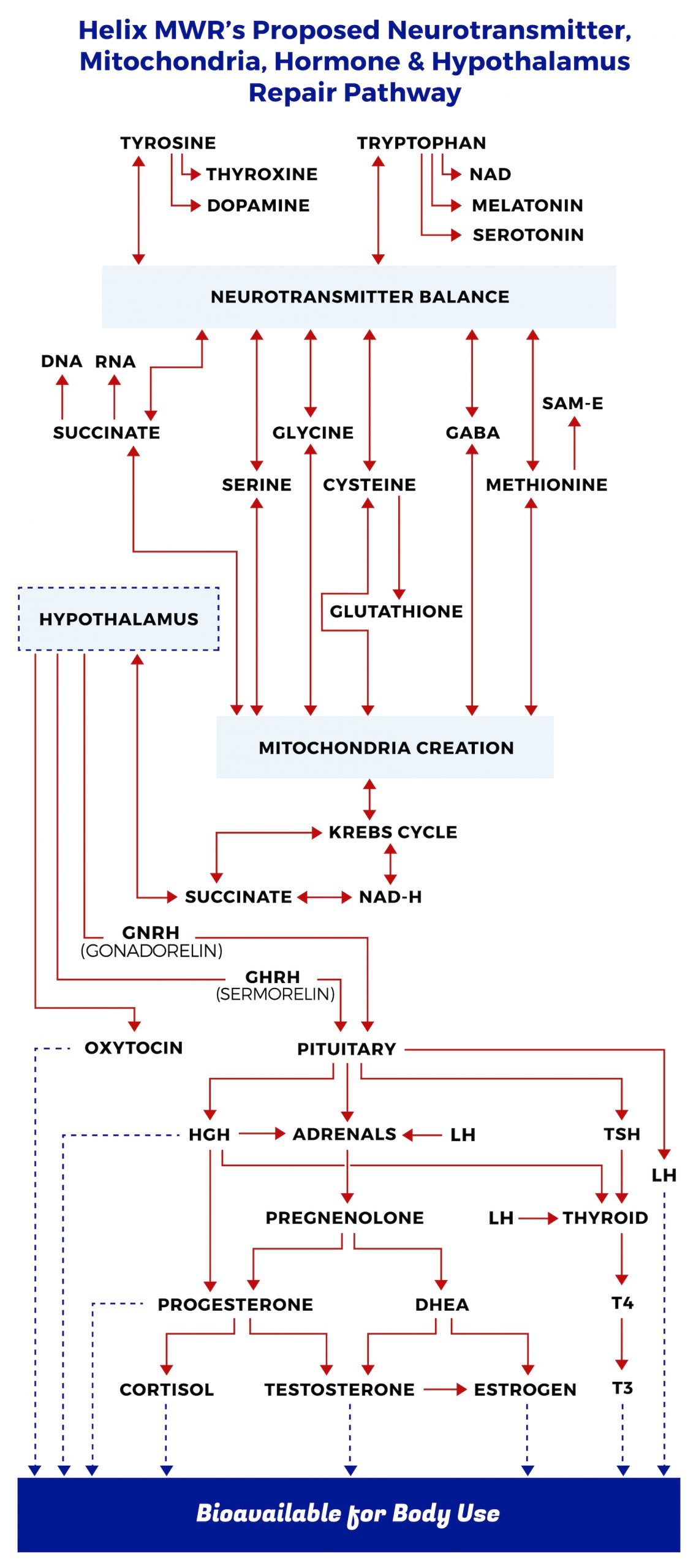 Chart illustrating Helix MWR's proposed neurotransmitter, mitochondria, hormone and hypothalamus repair pathway